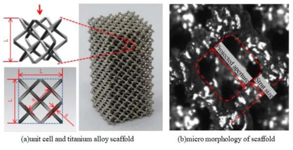 仿真模拟骨垢构造3D打印的钛金属支撑架的物理性能插图1