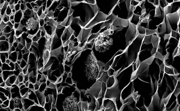 3D打印仿生珊瑚可以改善生物能和珊瑚礁插图1