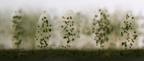3D打印仿生珊瑚可以改善生物能和珊瑚礁插图3