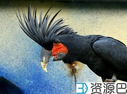"""鹦鹉打架嘴巴断了 """"3D打印""""帮它做了个新嘴插图3"""