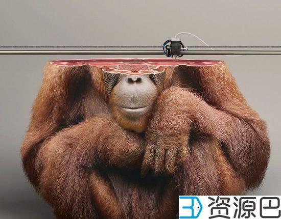 触碰心灵的广告 3D打印濒危野生动物插图9