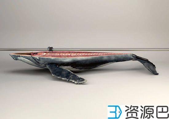 触碰心灵的广告 3D打印濒危野生动物插图5