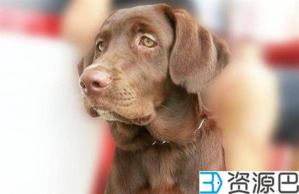 1603764066-6a28de2dadb4fc0.jpg-插件-巴西小狗获得3D打印新牙齿~又能愉快的吃饭了