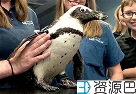1606874468-520e495feb73a15.jpg-插件-美国中学生玩转3D打印 让濒临灭绝的企鹅重获新生