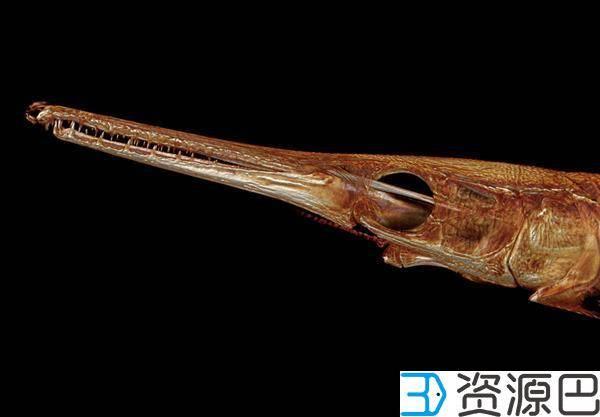 1608516067-88df21246b5cbc8.jpg-插件-好大的工程 美国教授欲制作世界2万余种鱼类的3D打印模型