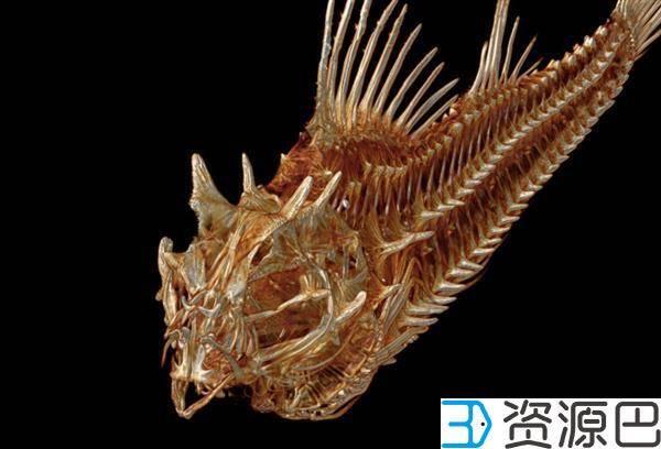 1608516067-efa592edf759f2f.jpg-插件-好大的工程 美国教授欲制作世界2万余种鱼类的3D打印模型